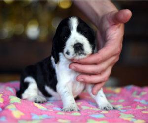 O(h) puppies!