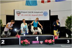 2 x CACIB Innsbruck