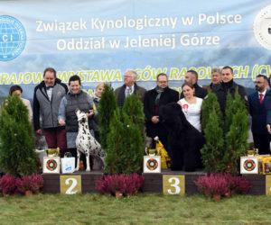 CWC Jelenia Góra
